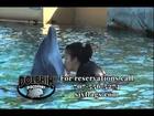 Six Flags Dolphins on SFTV 2012