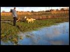 Greek animal rescue happy dogs